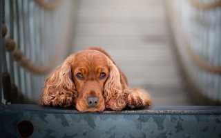 Сочинение Собака – друг человека 5 класс
