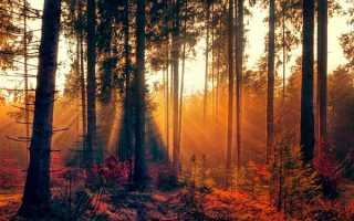 Сочинение Осенний лес (Осень в лесу) 2, 3, 5, 6 класс