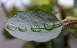 Сочинение на тему Весенний дождь 5 класс