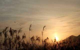 Почему Чичиков – главный герой поэмы Мертвые души?