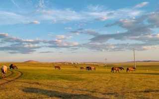 О чём плачут лошади – краткое содержание рассказа Абрамова (сюжет произведения)