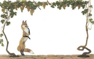 Лисица и виноград – краткое содержание басни Эзопа (сюжет произведения)