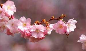 Сочинение Любовь в рассказе Кавказ Бунина 8 класс