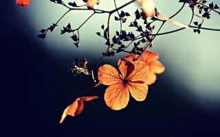 Псковитянка – краткое содержание оперы Римского-Корсакова (сюжет произведения)
