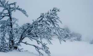 Тема Родины в творчестве Есенина сочинение 11 класс