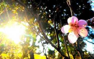 Сочинение Поручик в рассказе Солнечный удар Бунина
