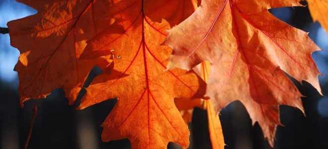 Сочинение на тему Природа осенью (Осенняя природа)