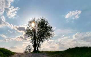 В чем трагедия Евгения Базарова в романе Отцы и дети Тургенева сочинение 10 класс