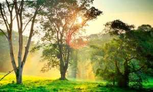 Сочинение по произведению Кладовая Солнца Пришвина (6 класс)