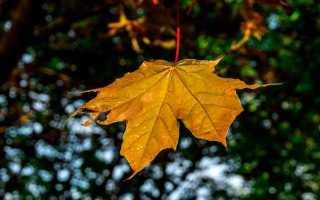 Сочинение Осенние каникулы и как я их провожу