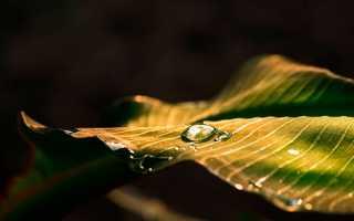 Сочинение Путешествие капельки воды в природе по географии 6 класс