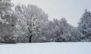 Сочинение Зимний лес (Лес зимой) 6 вариантов
