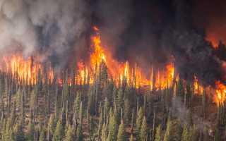 Сочинение на тему Берегите лес от пожара 4 класс