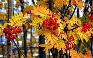 Сочинения про Осень