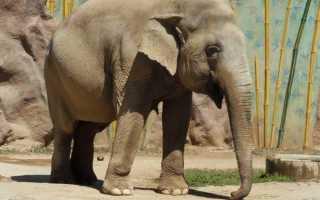 Анализ и мораль басни Слон и Моська Крылова