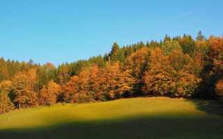 Образ и роль природы в Слове о полку Игореве