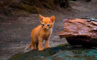 Сочинение Жестокое обращение с животными