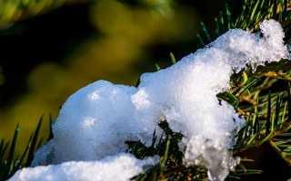 Севастополь в декабре месяце – краткое содержание рассказа Толстого (сюжет произведения)