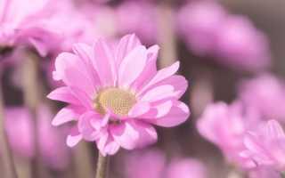 Сочинение рассуждение про Цветы